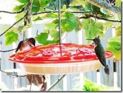 lopez hummingbird 071211 00004