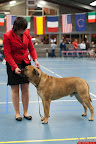 20130511-BMCN-Bullmastiff-Championship-Clubmatch-1880.jpg