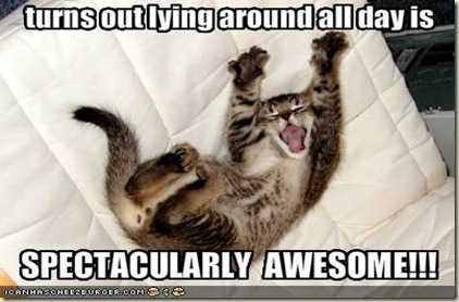 funny-pictures-your-cat-likes-laying-around-all-day