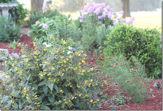 corner of garden