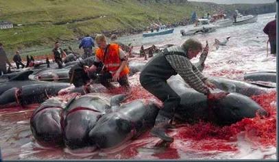 covardia-contra-baleias