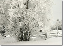 paisajes nevados (67)