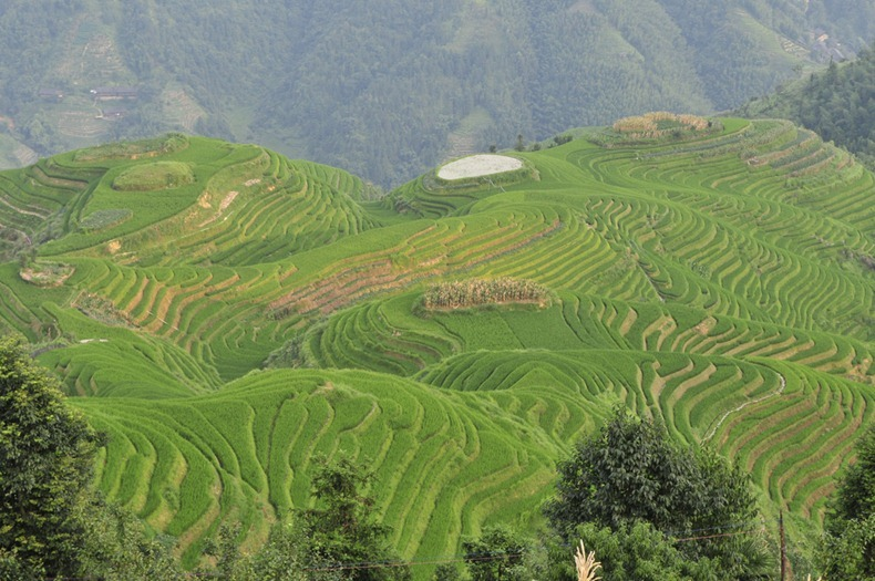 rice-terraces-10