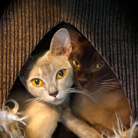 Home sweet home by Krista Nurmi - Animals - Cats Portraits