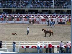 9404 Alberta Calgary - Calgary Stampede 100th Anniversary - Stampede Grandstand - Calgary Stampede Rodeo Tie-Down Roping Championship
