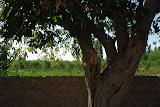 Hami - Arbre et vue sur champs de melon