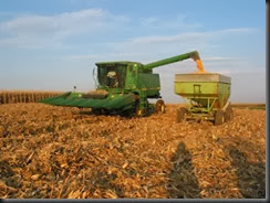 Iowa Corn Harvest 4