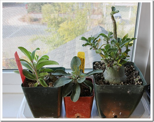 111218_three_potted_plants
