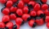 Kacang Saga Rosary