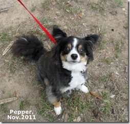 Pepper-Nov-2011