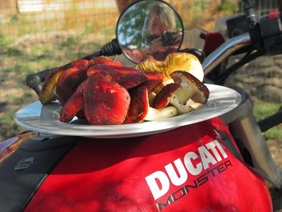 Ducati with Russula xerampelina