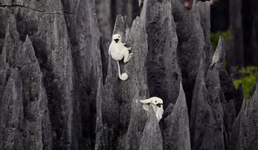 Madagascar.StoneForest.jpg