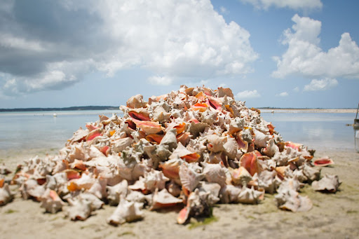 A heap of shells on the beach.