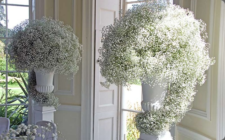 babys breath HomePage_10 philippa craddock