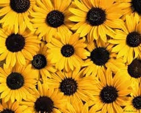 Sunflowers2_thumb