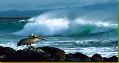 Foto Galapagos Pellicano Bruno