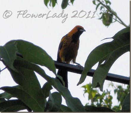 06-13-inkn-bird2