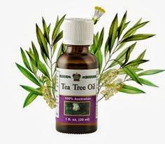 Козметично масло от чаено дърво / Tea Tree Oil