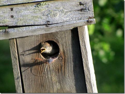 Birdmotel05-13-13b