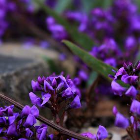Spring_15.jpg