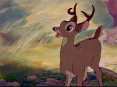 11 Bambi adulte