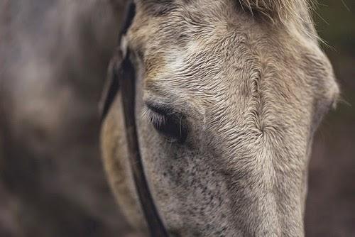 animal horse.jpg