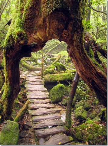 TreeswitMA29079731-0017