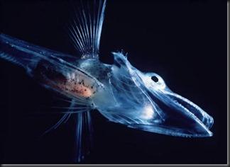 a357_fish