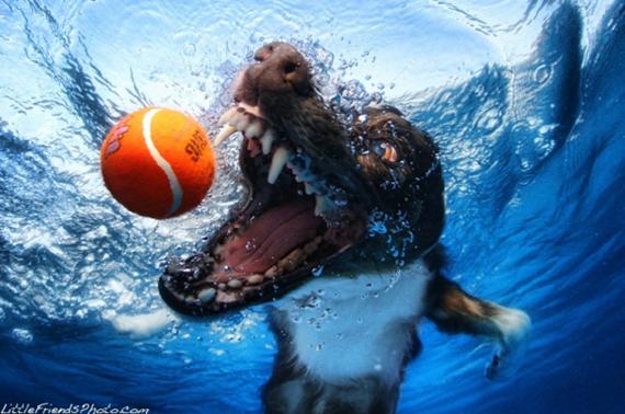 Underwater Dog 01