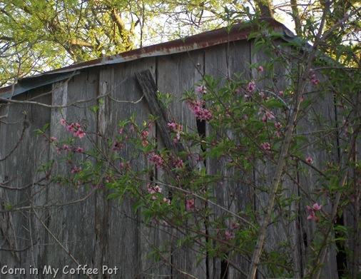 Around the Yard 3-18 thru 3-22-2011 009