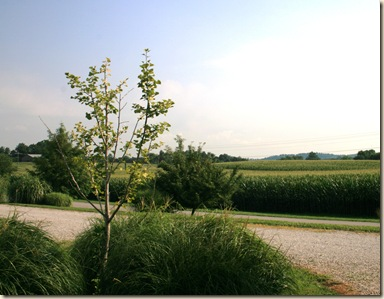 View from our campsite in Cave Country RV Park, Cave City, KY.  Manicured park surrounded by corn fields.