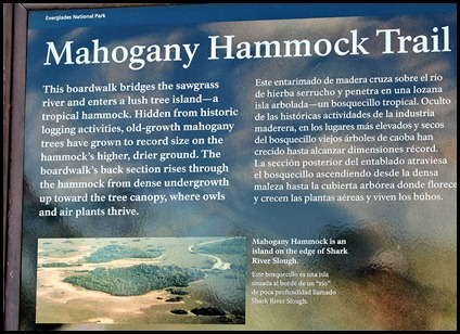 23 - Mahogany Hammock Trail