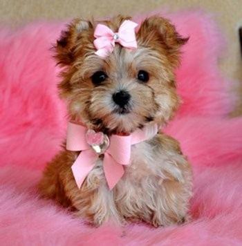 dog pink