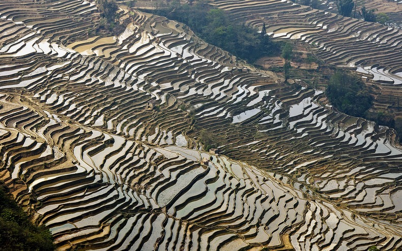 yunnan-rice-terraces2-2