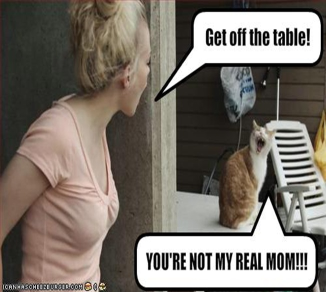 funny-pictures-cat-and-human-argue