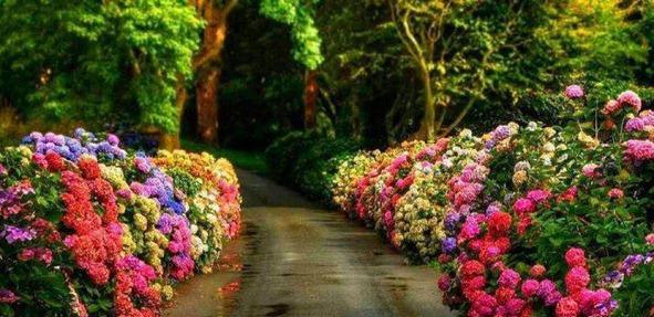 campo de flores-estrada de flores