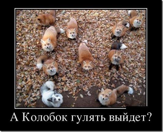 1350528309_podborka-demotivatorov-29