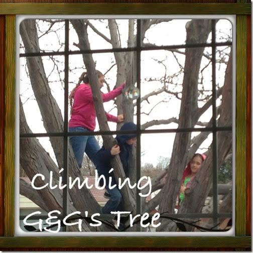 climbing G&G's Tree (5)
