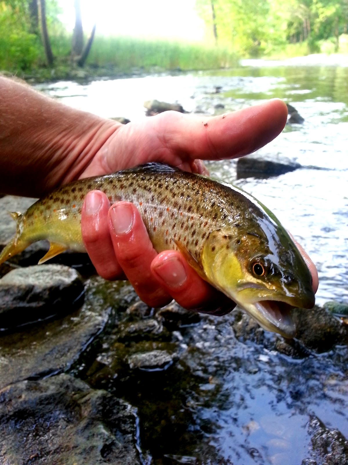 Stroker ace fly fishing indiana for Trout fishing indiana