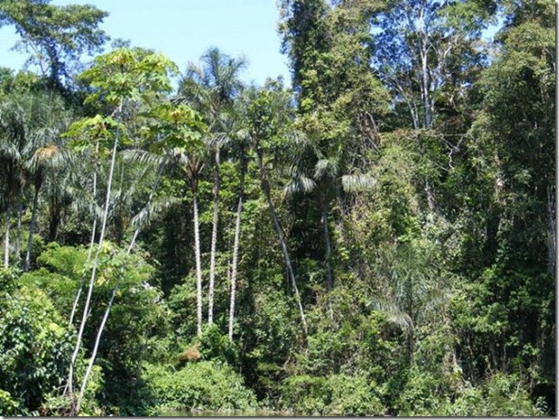 beautiful-amazon-rain-forest-26