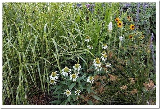 110707_frontyard_grasses perennials