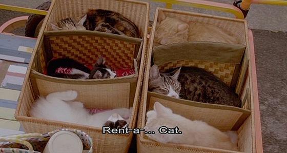 Rent a Cat_014