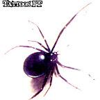 spiders-05.jpg