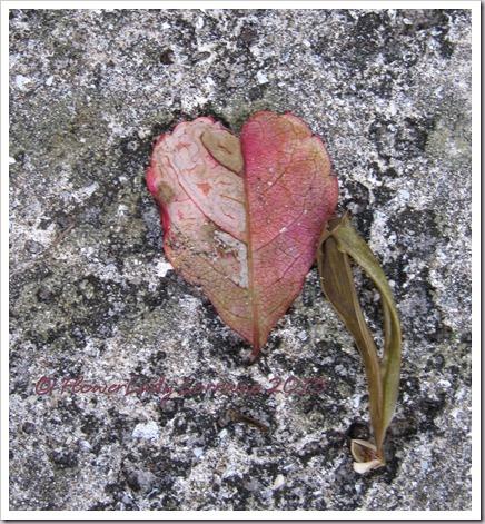 03-18-leaf-heart
