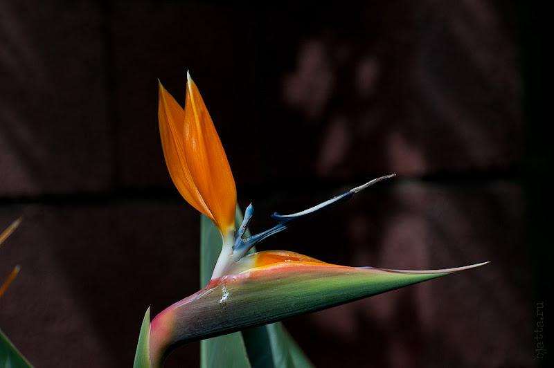 Ботанический сад. Канары. Тенерифе. Круиз. Costa Concordia.