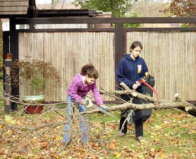 Fallen Apple Tree Sandy 2012-Sheva Apelbaum