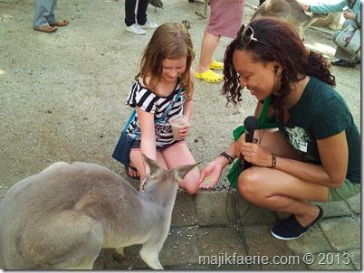 57 feeding kangaroos