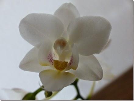 2015_04 Orchideen (20)