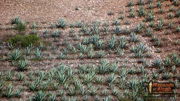 Hierve el Agua Oaxaca  5