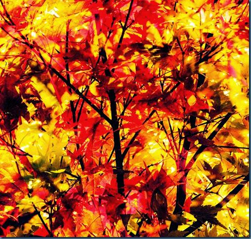fall-2013 (1 of 1)